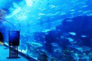 Vootours-aquarium-in-dubai-mall