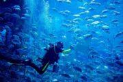 dubai-mall-aquarium-tour