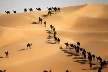 Liwa Desert Safari From Abu Dhabi | VooTours Tourism